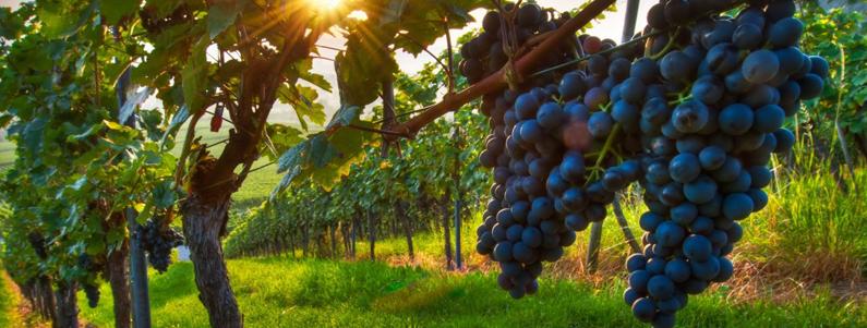 Temecula Wine Tours Limousine